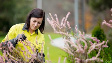Photo of School Based Horticulture Traineeship – Victor Harbour