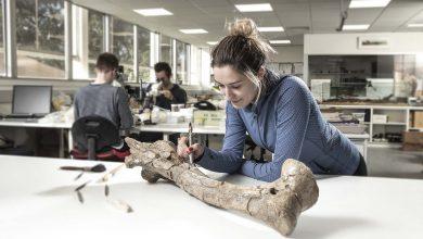 Photo of New Palaeontology Course at Flinders University