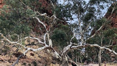 Photo of Eucalypt Photo Competition