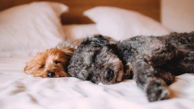 Photo of 6 tips for better sleep