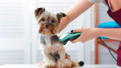 Photo of How to become a Dog Groomer