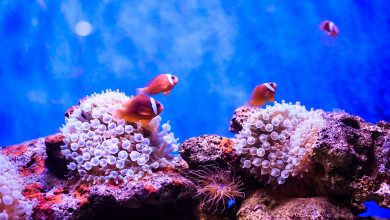 Photo of Great Barrier Reef Underwater Film & Photo Competition