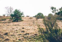 Photo of Bush Regeneration Short Course with TAFE NSW