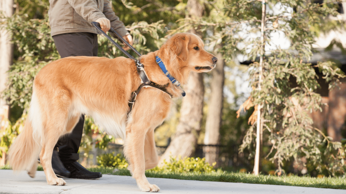 How to become a Dog Handler
