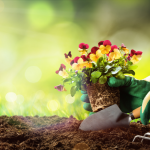 How to become a Gardener